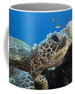 Hawaii, Green Sea Turtle Coffee Mug