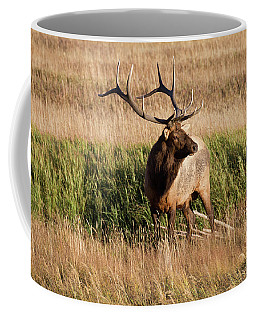 6 X 6 Bull Elk Coffee Mug