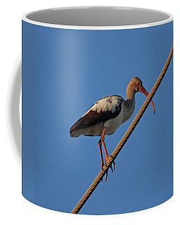 Coffee Mug featuring the photograph 8- Brown Ibis by Joseph Keane