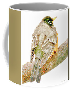 American Robin Male, Animal Portrait Coffee Mug