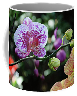 Butterfly Orchid Flowers Coffee Mug