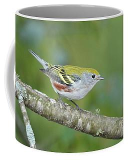 Chestnut-sided Warbler Coffee Mug by Alan Lenk