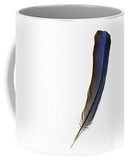 Blue Jay Coffee Mugs