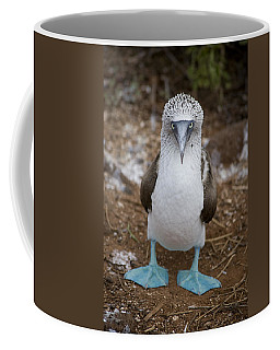 A Blue Footed Booby Looks At The Camera Coffee Mug