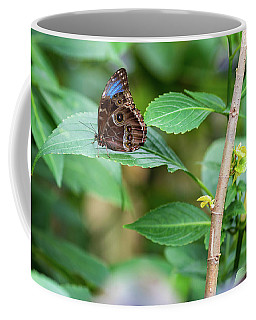 Coffee Mug featuring the photograph A Butterfly Waiting by Raphael Lopez