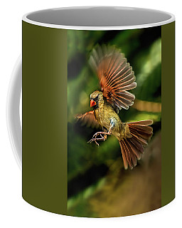 A Cardinal Approaches Coffee Mug