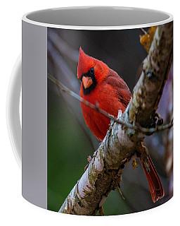 A Cardinal In Spring   Coffee Mug