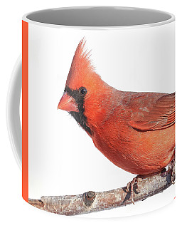 A Cardinal Says Good Morning Coffee Mug