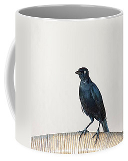 A Carib Grackle (quiscalus Lugubris) On Coffee Mug