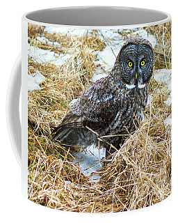 A Close Encounter - Great Gray Owl Coffee Mug