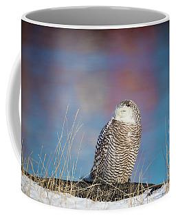 A Colorful Snowy Owl Coffee Mug