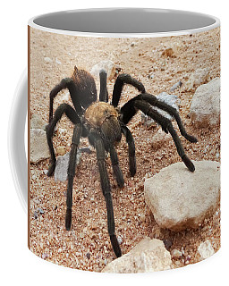 A Costa Rican, Also Known As Desert, Tarantula Coffee Mug