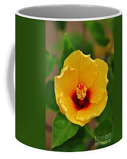 A Cup Of Hibiscus In The Morning Coffee Mug by Craig Wood