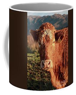 Coffee Mug featuring the photograph A Curious Red Cow by Maria Gaellman
