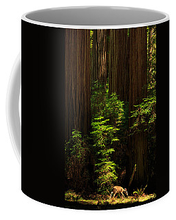 A Deer In The Redwoods Coffee Mug by James Eddy