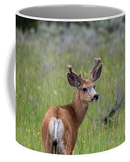A Deer In Yellowstone National Park  Coffee Mug