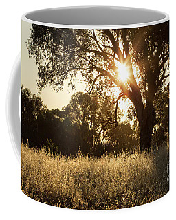 Coffee Mug featuring the photograph A Golden Afternoon by Linda Lees
