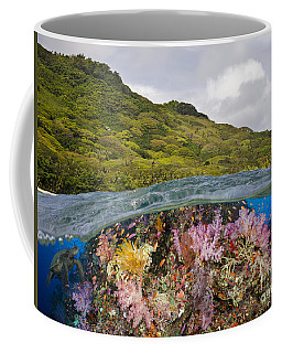 Alconarian And Gorgonian Coral  Coffee Mug