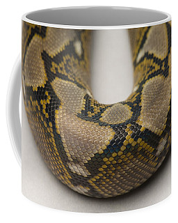A Juvenile Reticulated Python Coffee Mug
