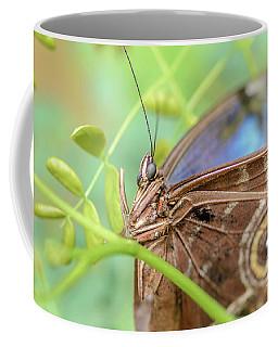 Blue Morpho Butterfly Coffee Mug by Tamara Becker