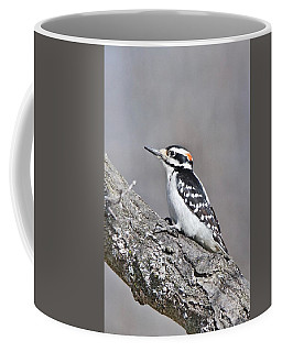 Coffee Mug featuring the photograph A Male Downey Woodpecker 1120 by Michael Peychich