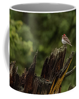 A Male Purple Finch In Spring Coffee Mug