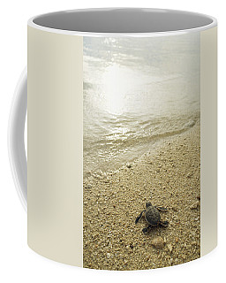 A Newly Hatched Green Sea Turtle Making Coffee Mug