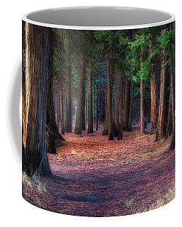 A Path Of Redwoods Coffee Mug