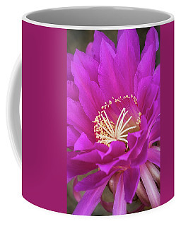 Coffee Mug featuring the photograph A Pink Punch  by Saija Lehtonen