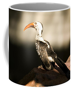 A Red-billed Hornbill At The Lincoln Coffee Mug