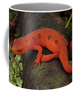 A Red Eft Crawls On The Forest Floor Coffee Mug
