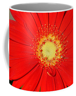 Coffee Mug featuring the photograph A Red Explosion by Sheila Brown