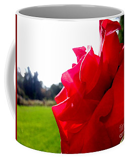 Coffee Mug featuring the photograph A Rose In The Sun by Robert Knight