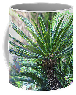 Coffee Mug featuring the photograph A Shady Palm Tree by Raphael Lopez