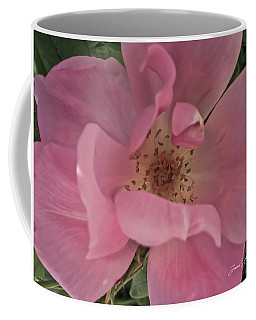 Coffee Mug featuring the photograph A Single Pink Rose by Joann Copeland-Paul