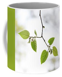 A Sky Behind Leaves Coffee Mug