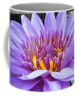 A Sliken Purple Water Lily Coffee Mug