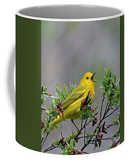 A Songbird Coffee Mug