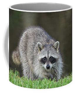 A Surprised Raccoon Coffee Mug