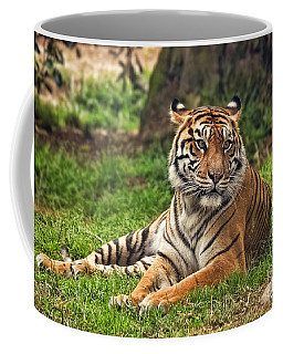 A Tiger Relaxing On A Cool Afternoon Coffee Mug