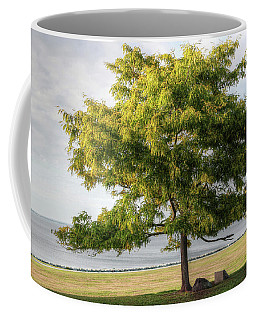 Coffee Mug featuring the photograph A Tree In The Park Bristol Ri by Tom Prendergast
