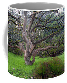Coffee Mug featuring the photograph A Tree In The Park  by Catherine Lau