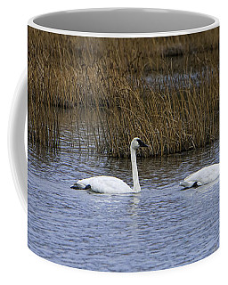 A Trio Of Swans Coffee Mug