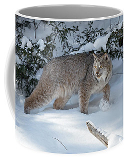 Coffee Mug featuring the photograph A Walk In The Woods by Jack Bell