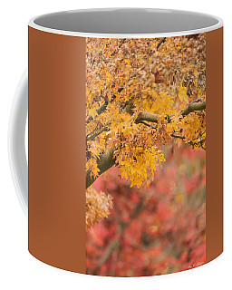 A Walk Through Autumn  Coffee Mug