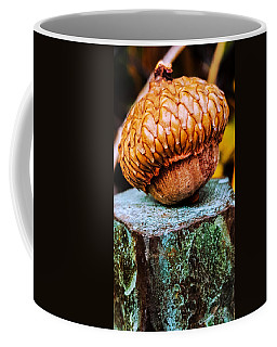 Acorn Coffee Mug by Bruce Carpenter