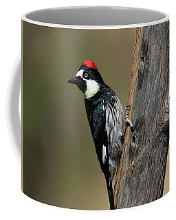 Acorn Woodpecker On Tree Coffee Mug