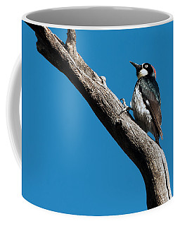 Coffee Mug featuring the photograph Acorn Woodpecker by Tam Ryan