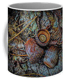 Coffee Mug featuring the photograph Acorns by Lilia D