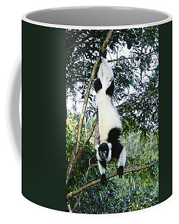Acrobatic Lemur Coffee Mug